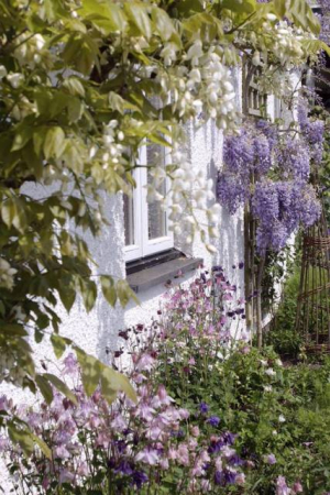 May 18 wisteriaed