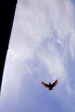 May 18 swallows
