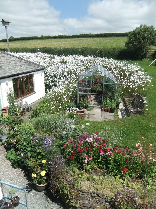 June 15 garden from upstairs
