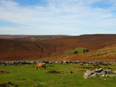 The view from Grimspound, Dartmoor