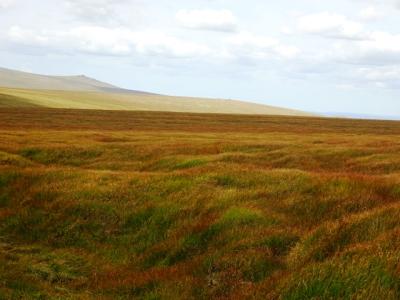 dovegreyreader scribbles: Dartmoor