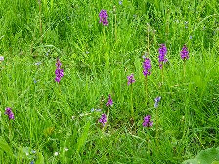 Kod tremaine meadow