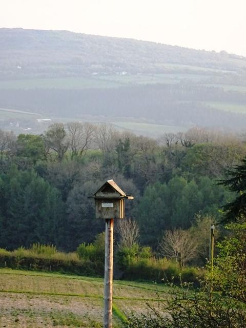 Barn owl box 2