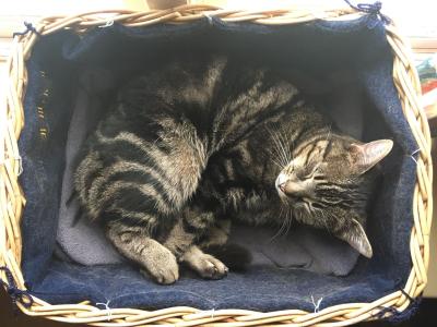 Magnus in the basket