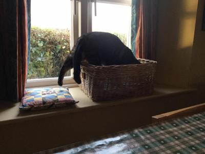Magnus & the basket