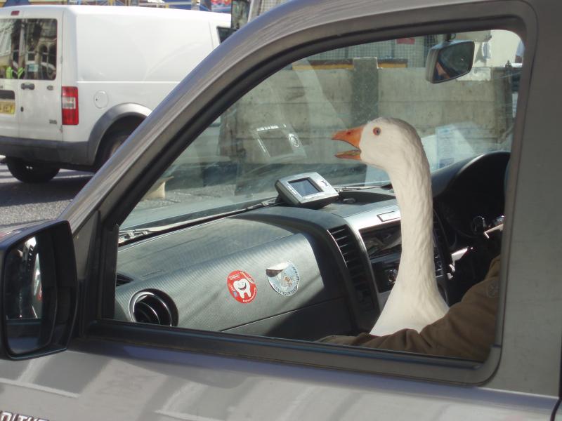 Goose fair 09 079