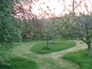 Orchard_1