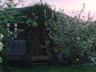 Orchard_2