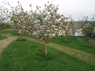 Orchard_3