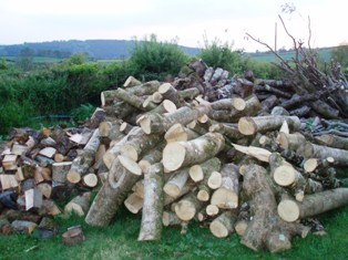 Fri_gard_woodpile_1