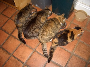 Four_cats