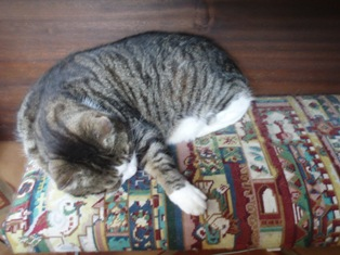 Deskbooks_cat