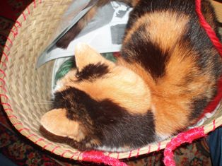 Knit_cat