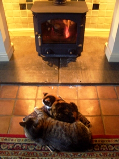 Cats_and_fire